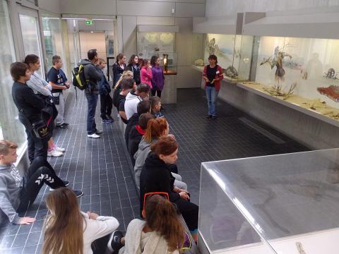 musee-de-la-prehistoire-nemours-1