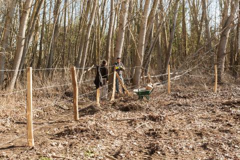26-02-2019 installation de la clôture du parc à bovins